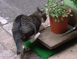 kitty-koiwa.jpg