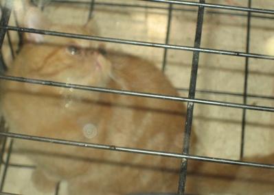mexico-cats2.jpg