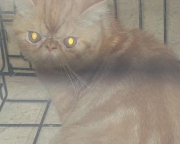 mexico-cats3.jpg
