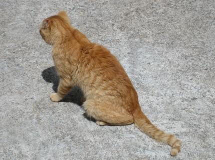 mexico-cats4.jpg
