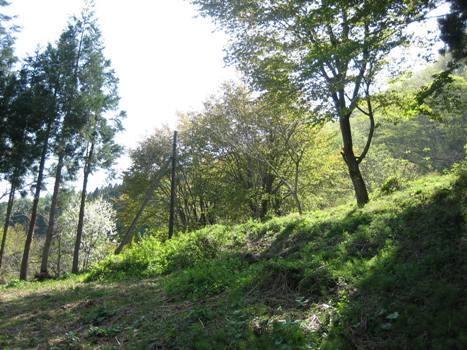 osore-1.jpg