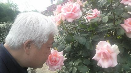 rose36.jpg
